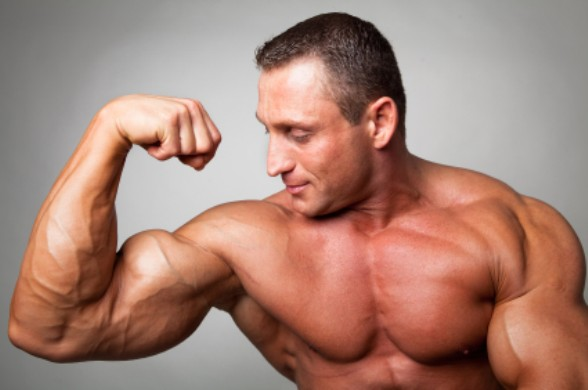 Tips For Muscle Building