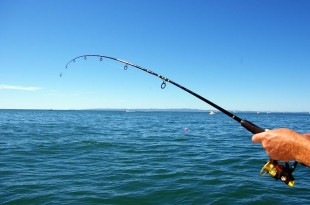 Grab The Fishing Probabilities In California Delta