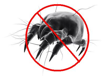 Better Sleep & Allergy Relief: How To Get Rid Of Dust Mites In Your House