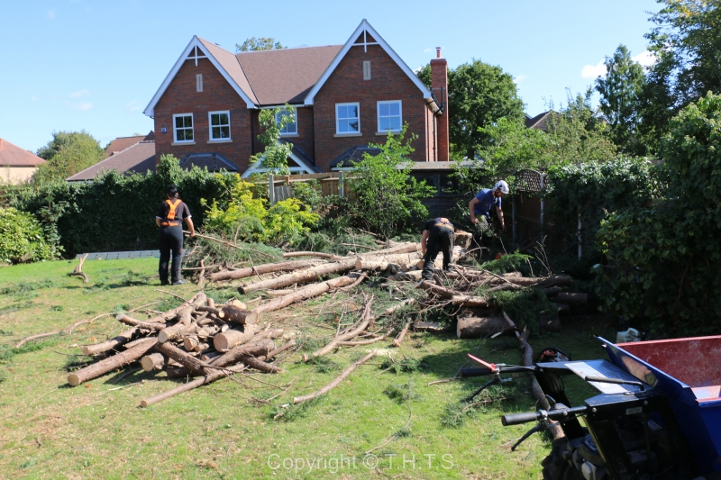 The Services Offered By Tree Surgeons Upminster