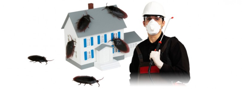 How To Make The Choice Of Reliable Pest Controllers London?