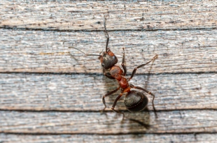 4 Ways to Prevent Spring Pests from Getting In Your Home