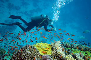 4 Things To Ponder On Before Competing Scuba Diving Competition In Florida