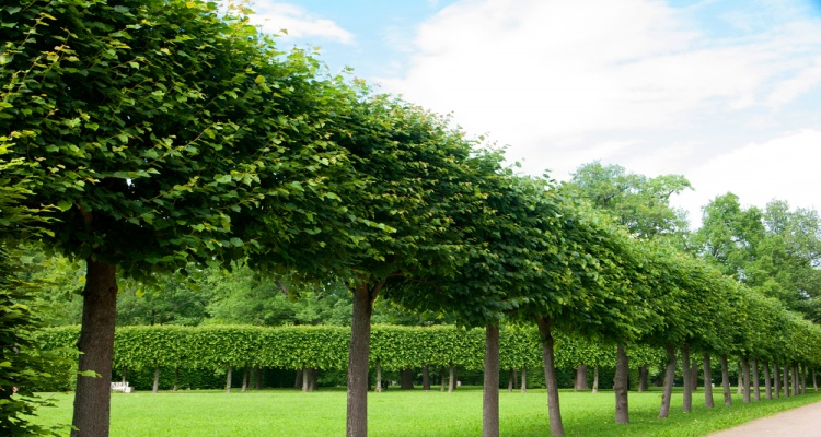 The Impact Of Trees On A Life Of A Human – An Ample Light On The Unknown Facts