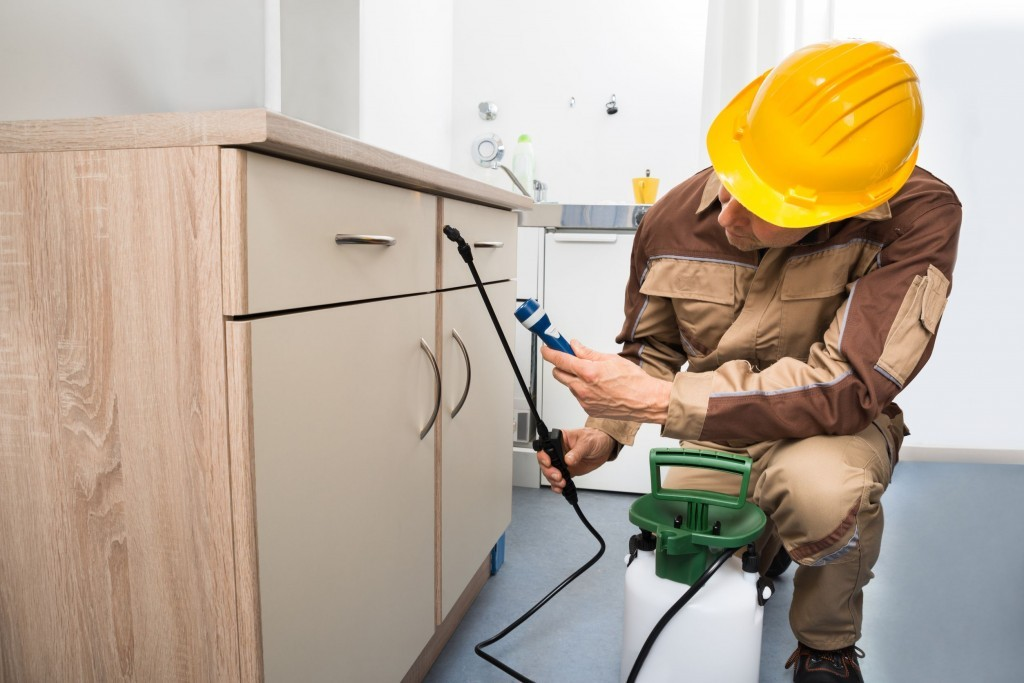 Effective and Reliable Pest Control Services To Recover Your Place From Pests