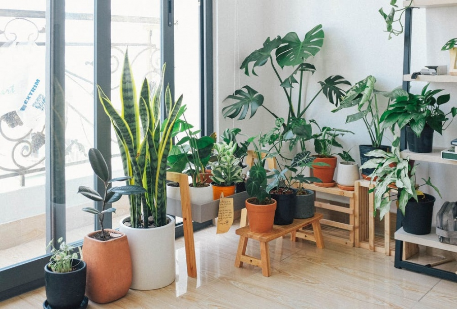 How To Tell If Your Windows Are Helping Your Indoor Plants