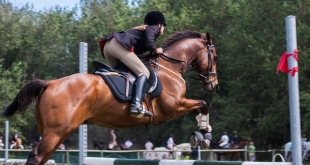 Which Kind Of Riding Saddles Are Best For Beginner Equestrians