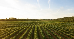 Tips For Being More Efficient When Maintaining Your Crops