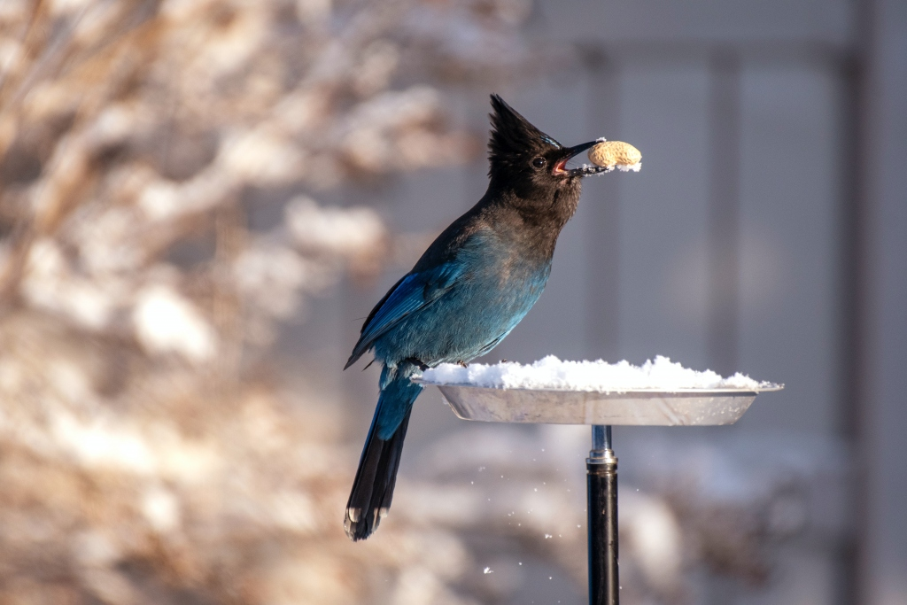 Why It Matters to Protect Your Home Against Birds