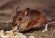How You Can Keep Your Home Safe From Unwanted Pests and Critters